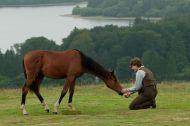 Gallery : War Horse(2011)